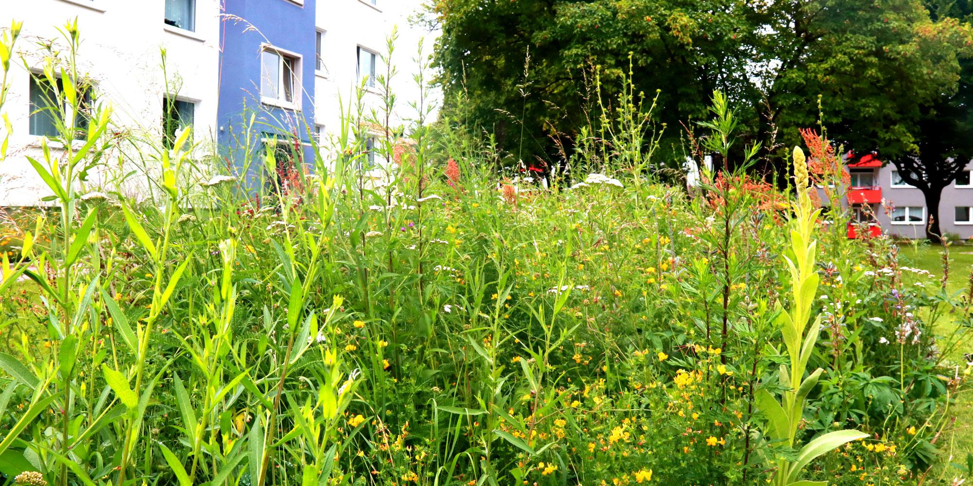 Wildblumenwiese in Bielefeld